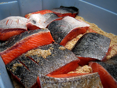 King Salmon Fillets in Bin